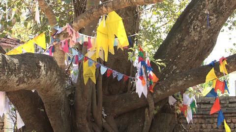 Bodhi-tree in Anuradhapura, Sri Lanka Stock Video Footage