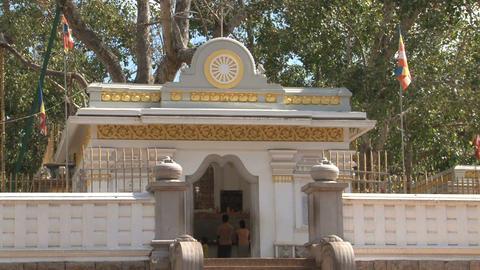 Sri Maha Bodhi, Anuradhapura, Sri Lanka Stock Video Footage
