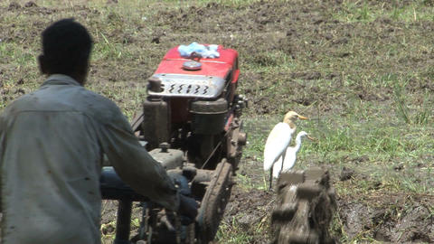 Farmer at work Stock Video Footage