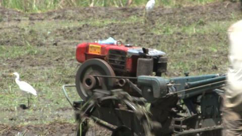 Man farming Stock Video Footage