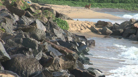Coast of Negombo Stock Video Footage
