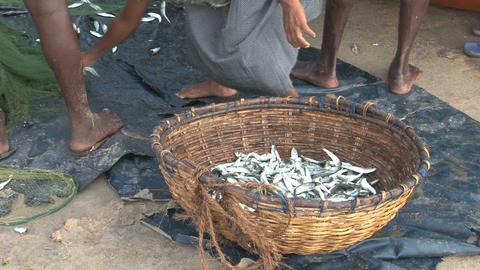 Fish market Sri Lanka Footage