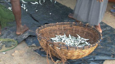 Fish market Sri Lanka Stock Video Footage