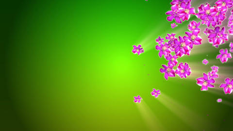 Mother Nature Flower Background Stock Video Footage