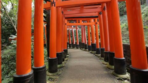 Fushimi Inari shrine Footage