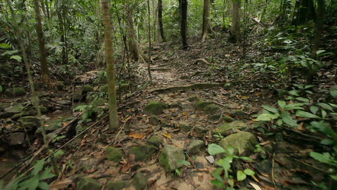 Walking in jungle Stock Video Footage