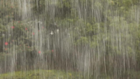 Heavy tropical rain Stock Video Footage