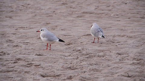 Two seagulls on the beach Footage