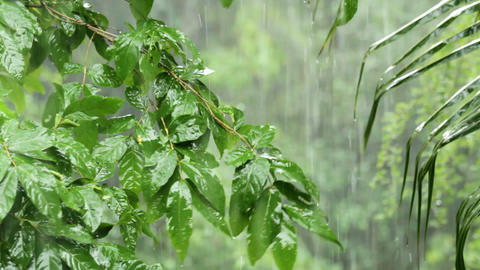 Tropical rain Stock Video Footage
