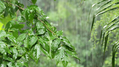 Tropical rain Stock Video Footage