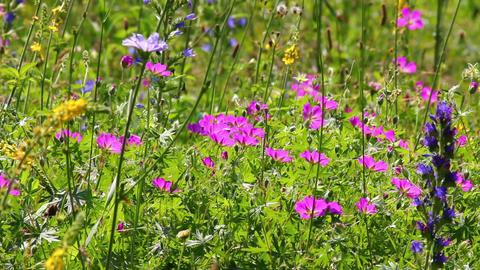 flowers on summer meadow Stock Video Footage