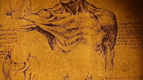 Leonardo da Vinci anatomy Stock Video Footage
