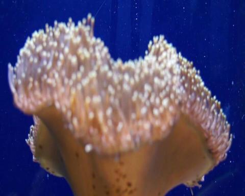 blowfish closeup Stock Video Footage