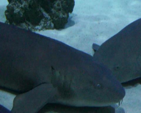 moray eel closeup Stock Video Footage