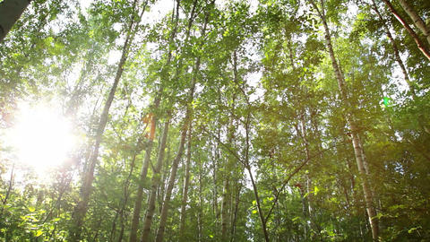 Russian birches Stock Video Footage