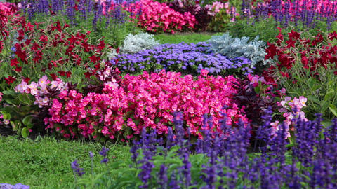 Flowerbed with different flowers Footage