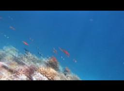 Red Sea Snorkeling 1