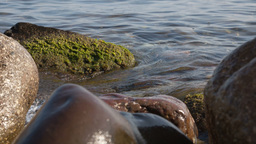 Water waves between stones on the sea beach Stock Video Footage