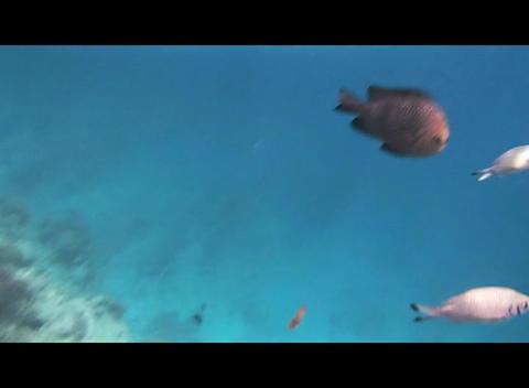 Red Sea Snorkeling 1 0