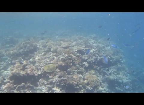 Red Sea Snorkeling 1 1