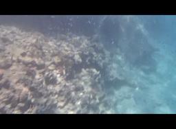 Red Sea Snorkeling 1 2