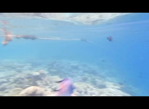 hrg 09 Stock Video Footage