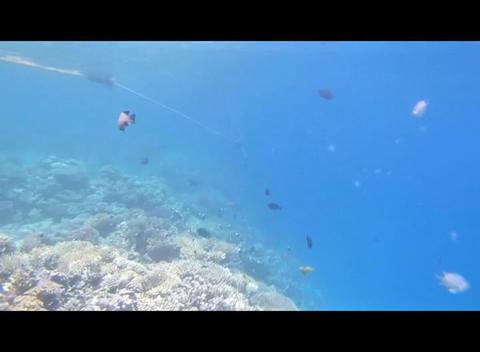Red Sea Snorkeling 2