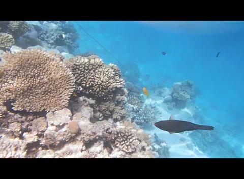 Red Sea Snorkeling 2 0