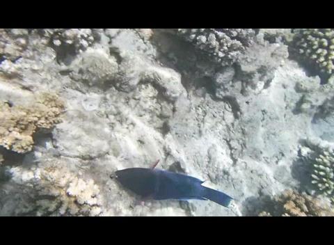 Red Sea Snorkeling 2 2