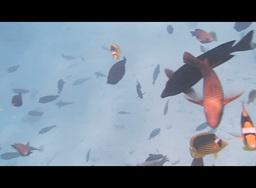 snorkeling Stock Video Footage
