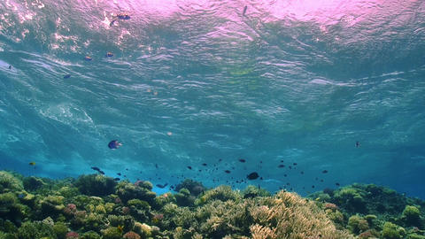 Waves of the sea over the coral reef Footage