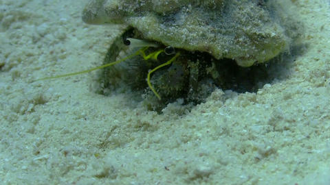 Hermit Crab walking in a coral reef Stock Video Footage