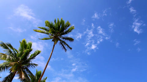 Idyllic blue sky and palm trees Stock Video Footage