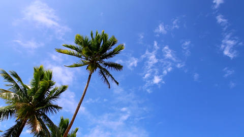 Idyllic blue sky and palm trees Footage