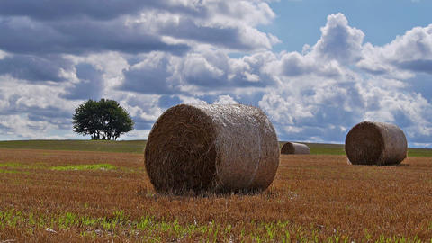 Haystack in the field Stock Video Footage