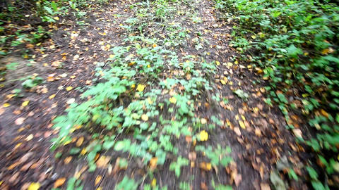 run on the road in the early autumn Stock Video Footage