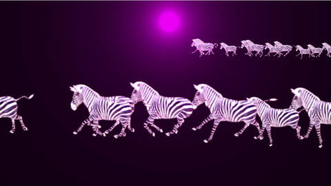 a group of zebra running at night Stock Video Footage