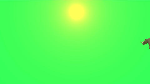 rhino running in sunlight Stock Video Footage