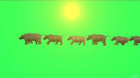 rhino running in sunlight Stock Video Footage