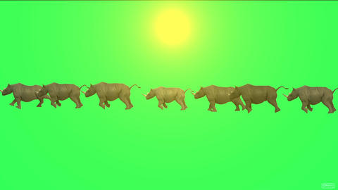 rhino running in sunlight Animation