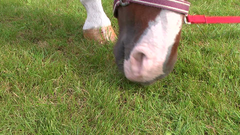 Close-up of a horse's head Stock Video Footage