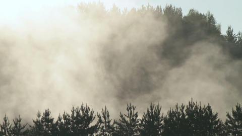Fog over trees. Dawn Footage