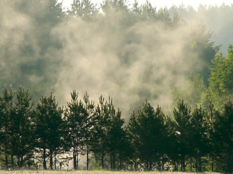 Fog over trees Stock Video Footage