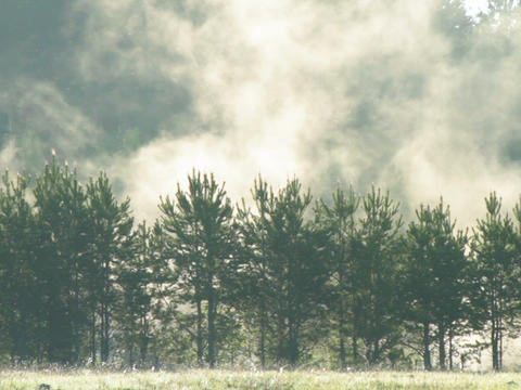 Fog over trees. Dawn Stock Video Footage