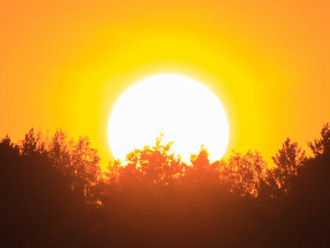 Sunset through the trees. Close-up. Free of glare Stock Video Footage