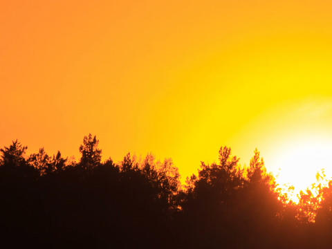 Sunset through the trees. Close-up. Free of glare  Footage