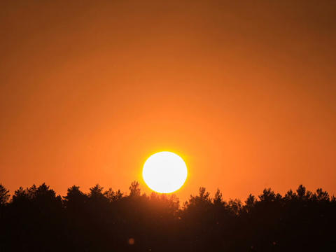 Sunset through the trees. Close-up. Time Lapse Stock Video Footage