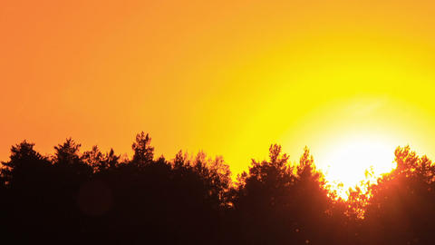 Sunset through the trees. Close-up. Time Lapse Footage