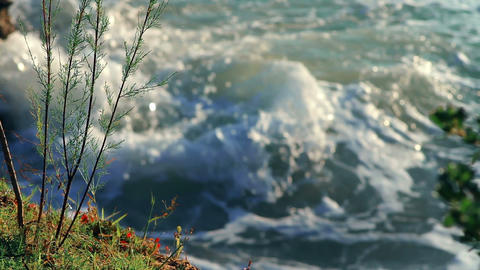 Plants on the cliff by the sea Stock Video Footage