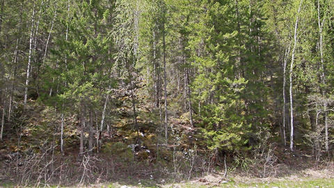 The slope is covered with wild forest. Russia, the Stock Video Footage